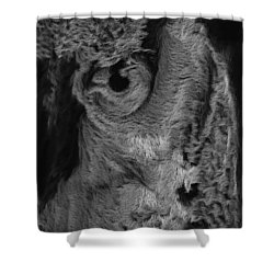 The Old Owl That Watches Blk Shower Curtain by ISAW Gallery