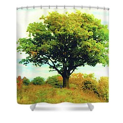 The Witness Tree Shower Curtain