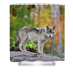 The Wolf. Shower Curtain