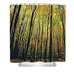 The Woods In The North Shower Curtain by Michelle Calkins