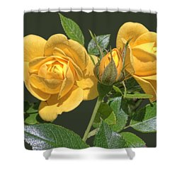 The Yellow Rose Family Shower Curtain by Daniel Hebard