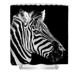The Zebra Stripes Shower Curtain