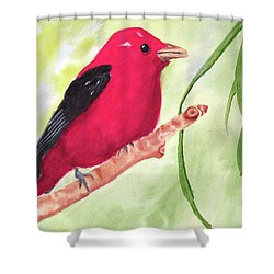 Theodore Tanager Shower Curtain