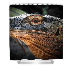 There Be Dragons, No. 5 Shower Curtain