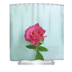 Shower Curtain featuring the photograph There Is Simply The Rose by Cindy Garber Iverson