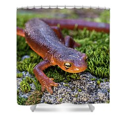 They Do Exist Shower Curtain