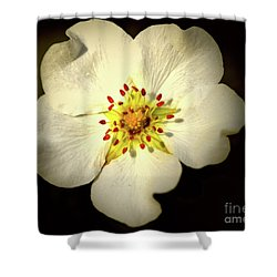 Thimbleberry Bloom  Shower Curtain by Baggieoldboy