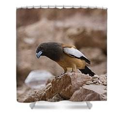Thinking Treepie Shower Curtain