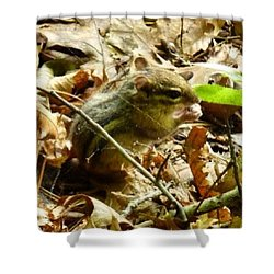 Chipmunk In The Leaves Shower Curtain