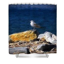 This Gull Has Flown Shower Curtain