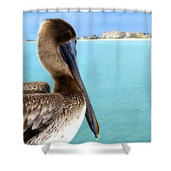 This Is My Town - Pelican At Clearwater Beach Florida  Shower Curtain