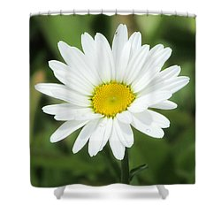 This Is Spring Shower Curtain
