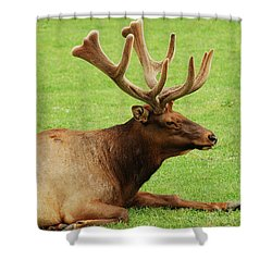 This Is The Life Shower Curtain by Michael Peychich