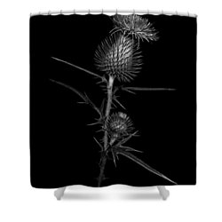 Thistle 1 Shower Curtain by Simone Ochrym