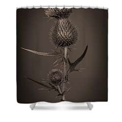 Thistle 2 Shower Curtain by Simone Ochrym