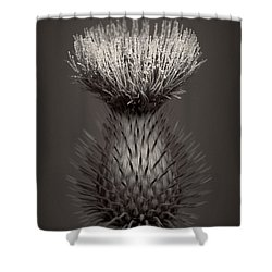 Thistle 3 Shower Curtain by Simone Ochrym
