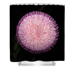 Thistle Bloom At Night Shower Curtain