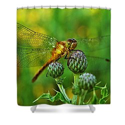 Thistle Dragon Shower Curtain by Michael Peychich