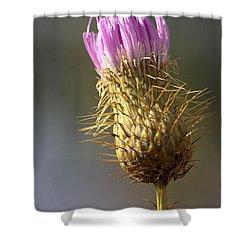 Thistle Shower Curtain by Joseph Skompski