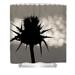 Thistle Silhouette - 365-11 Shower Curtain by Inge Riis McDonald