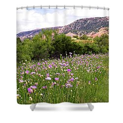Thistles In The Canyon Shower Curtain