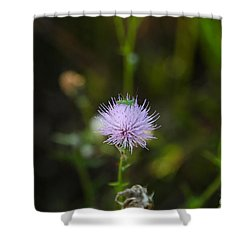 Thistles Morning Dew Shower Curtain by Christopher L Thomley