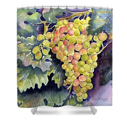 Thompson Grapes Shower Curtain