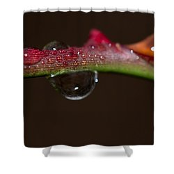 Thorn Dew Shower Curtain