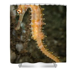 Thorny Seahorse Shower Curtain