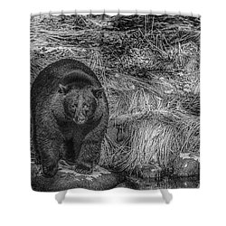 Thornton Creek Black Bear Shower Curtain