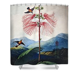 Thornton: Sensitive Plant Shower Curtain by Granger