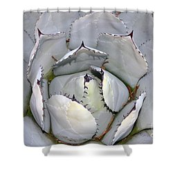 Cactus Patterns  Shower Curtain