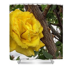 Thorny Love Shower Curtain