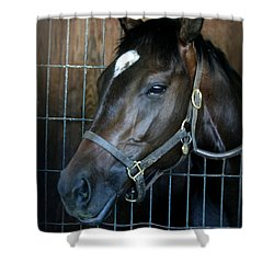 Shower Curtain featuring the photograph Thoroughbred by Cathy Harper