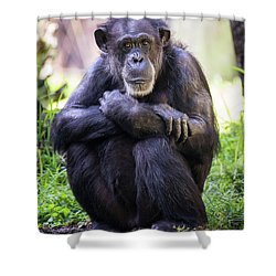 Thoughtful Chimpanzee  Shower Curtain by Stephanie Hayes
