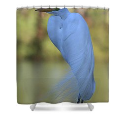 Shower Curtain featuring the photograph Thoughtful Heron by Kim Henderson