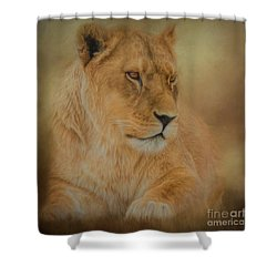 Thoughtful Lioness - Square Shower Curtain
