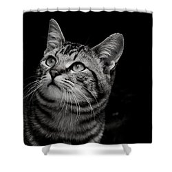 Shower Curtain featuring the photograph Thoughtful Tabby by Chriss Pagani
