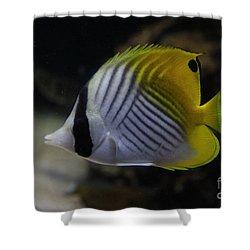 Threadfin Butterfly Fish Shower Curtain