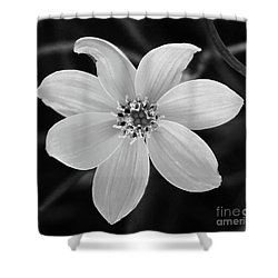 Threadleaf In Black And White Shower Curtain