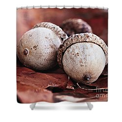 Three Acorns And Autumn Oak Leaves Shower Curtain