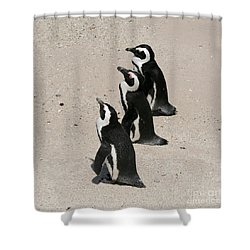 Three African Penguins Shower Curtain