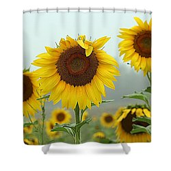 Three Amigos In A Field Shower Curtain