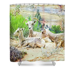 Three Big Horn Sheep Shower Curtain
