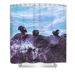 Shower Curtain featuring the photograph Three Birds by Jonny D