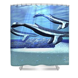 Three Blue Whales Move Shower Curtain by Corey Ford