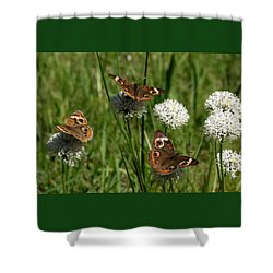 Three Buckeye Butterflies On Wildflowers Shower Curtain by Sheila Brown
