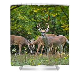 Three Bucks_0054_4463 Shower Curtain