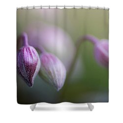 Three Buds Shower Curtain