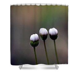 Three Buds Sprawling Daisy Shower Curtain